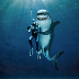 Dont Hug The Shark